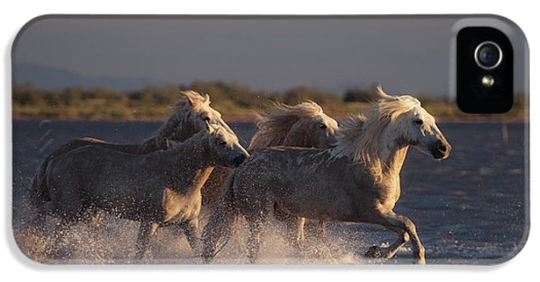 French iPhone 5 Case - Angels Of Camargue by Rostovskiy Anton