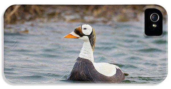 Arctic National Wildlife Refuge (anwr IPhone 5 Case by Hugh Rose