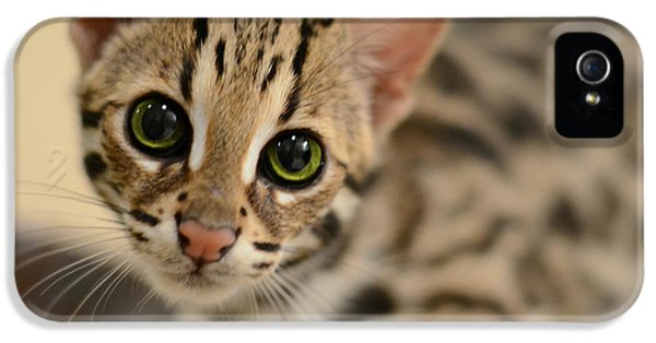 Cat iPhone 5 Case - Asian Leopard Cub by Laura Fasulo