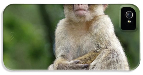 Barbary Macaque IPhone 5 Case by Nigel Downer