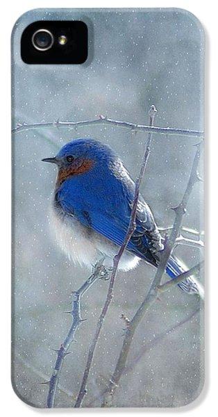 Blue Bird  IPhone 5 Case
