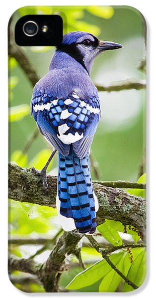 Bluejay IPhone 5 Case