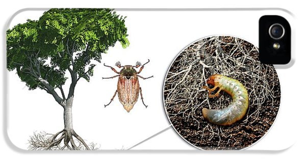 Cockchafer And Beech Tree IPhone 5 Case