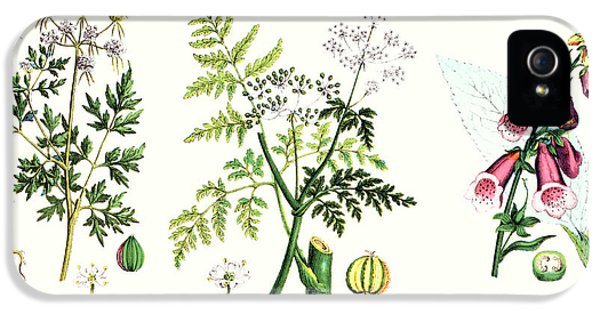 Common Poisonous Plants IPhone 5 Case by English School