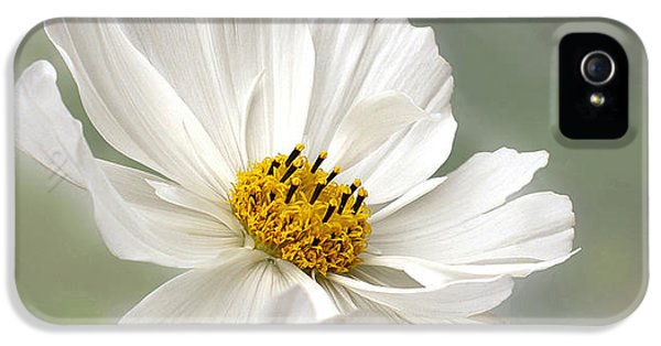 Stamens iPhone 5 Case - Cosmos Flower In White by Kaye Menner