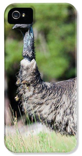 Emu (dromaius Novaehollandiae IPhone 5 Case by Martin Zwick