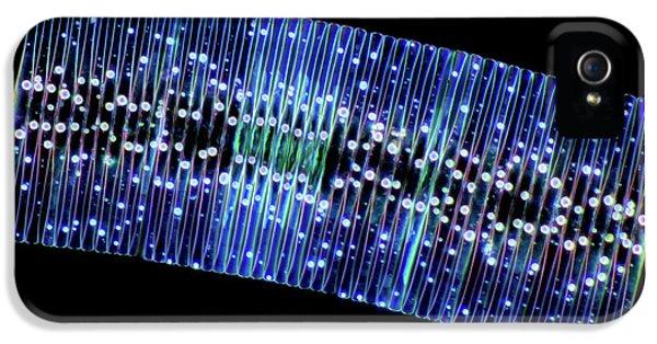 Fragilaria Diatoms IPhone 5 Case by Marek Mis