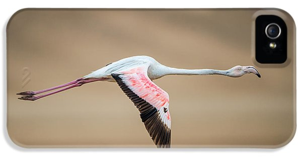 Greater Flamingo Phoenicopterus Roseus IPhone 5 Case by Panoramic Images