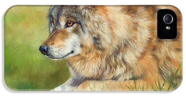 Wolves iPhone 5 Case - Grey Wolf by David Stribbling