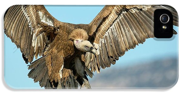 Griffon Vulture Flying IPhone 5 Case by Nicolas Reusens