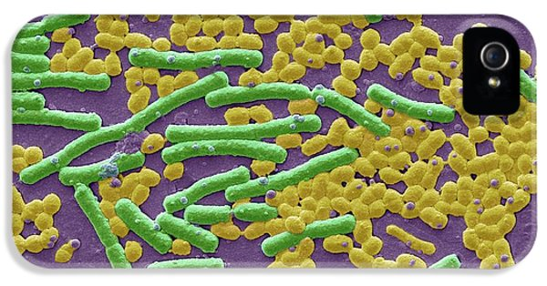 Haemolytic Streptococcus And E Coli IPhone 5 Case by Steve Gschmeissner