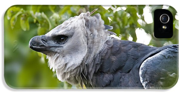 Harpy Eagle iPhone 5 Case - Harpy Eagle by Mark Newman