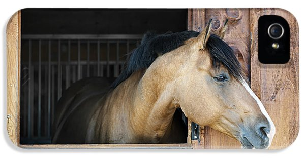 Horse In Stable IPhone 5 Case by Elena Elisseeva