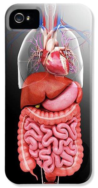 Human Internal Organs IPhone 5 Case by Pixologicstudio