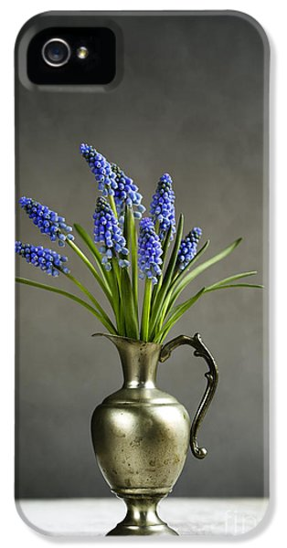 Hyacinth Still Life IPhone 5 Case by Nailia Schwarz