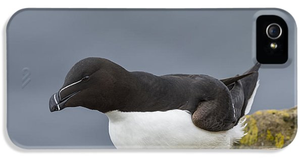 Razorbill IPhone 5 Case by John Shaw