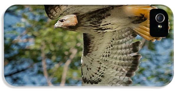 Red Tail Hawk IPhone 5 Case by Bill Wakeley