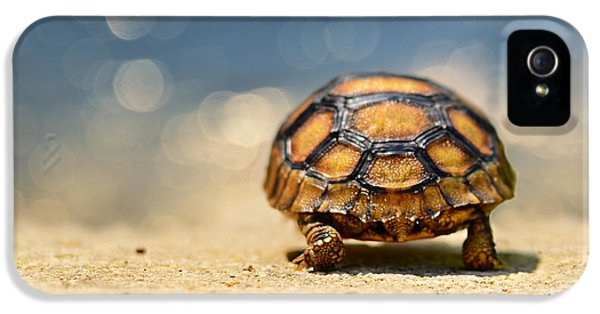 Turtle iPhone 5 Case - Road Warrior by Laura Fasulo