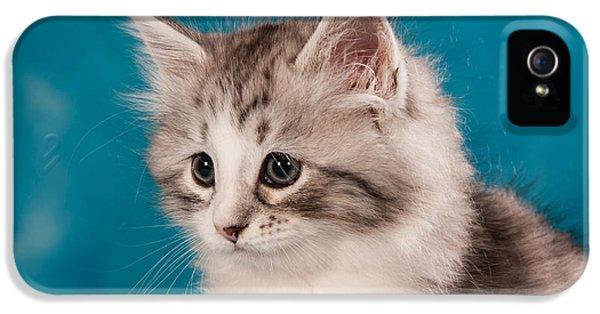 Cat iPhone 5 Case - Sibirian Cat Kitten by Doreen Zorn