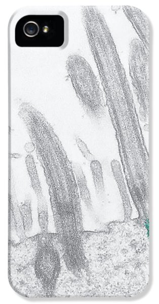 Stomach Cilia IPhone 5 Case by Marian Miller