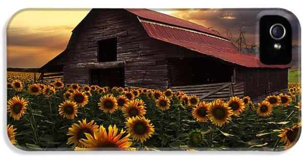 Sunflower Farm IPhone 5 Case