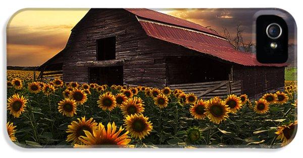 Sunflower Farm IPhone 5 Case by Debra and Dave Vanderlaan