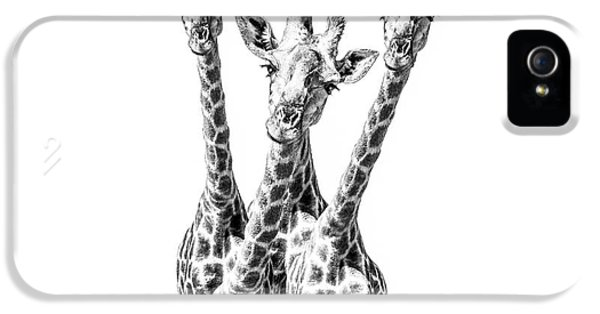 What Are You Looking At?  IPhone 5 / 5s Case by Diane Diederich