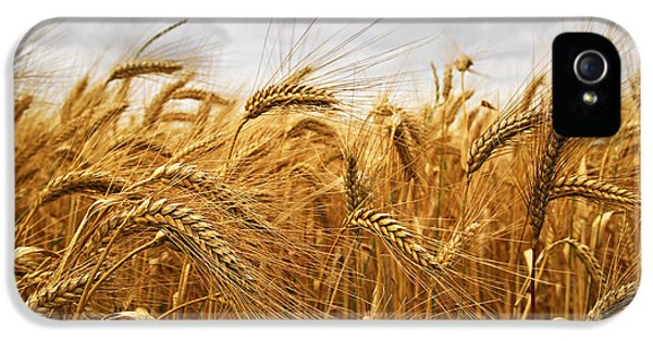 Rural Scenes iPhone 5 Case - Wheat by Elena Elisseeva
