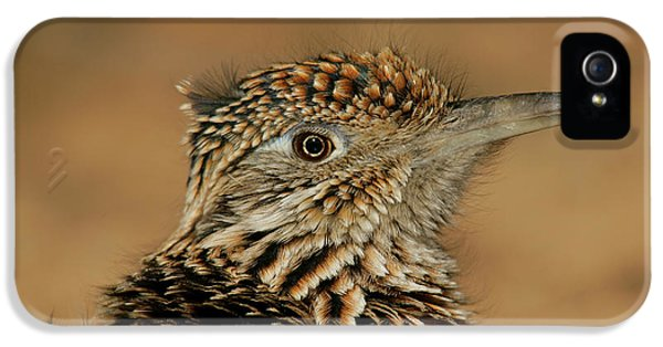 Roadrunner iPhone 5 Case - Usa, New Mexico, Bosque Del Apache by Jaynes Gallery