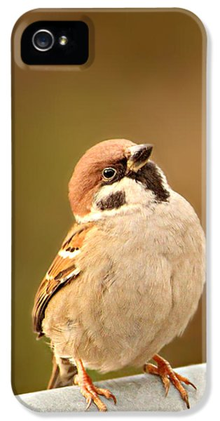 Sparrow IPhone 5 Case by Heike Hultsch