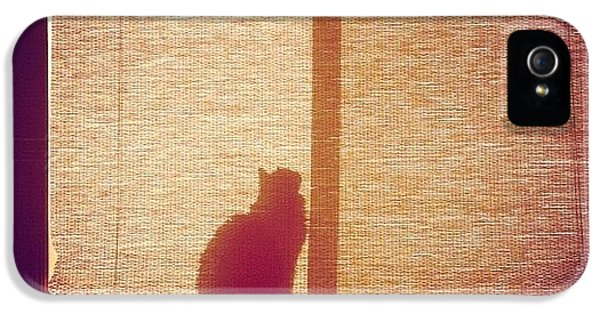 Sunny iPhone 5 Case - He Found The Light by April Moen