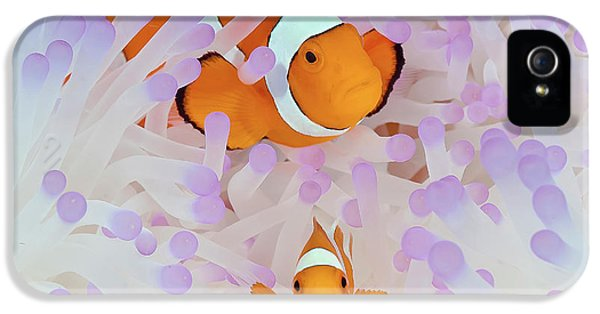 Indonesia, Papua, Raja Ampat IPhone 5 / 5s Case by Jaynes Gallery