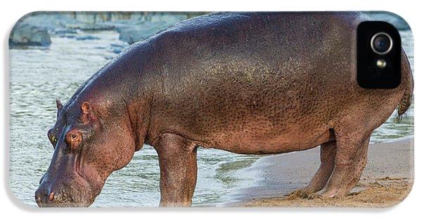Africa Tanzania Hippopotamus IPhone 5 Case