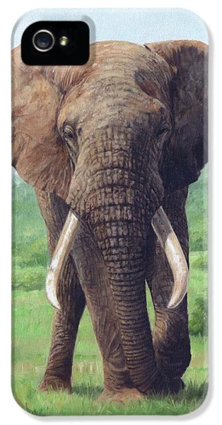 African Elephant IPhone 5 Case by David Stribbling