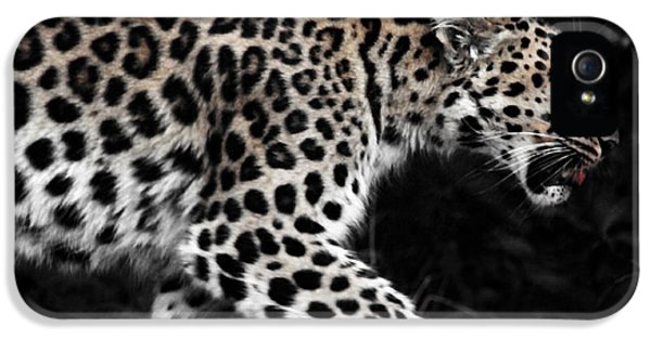 Amur Leopard IPhone 5 Case by Martin Newman