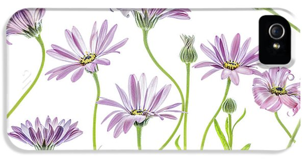 Daisy iPhone 5 Case - Cape Daisies by Mandy Disher