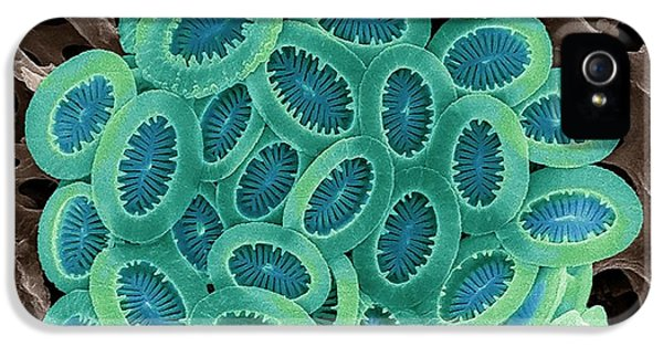 Coccolithophore IPhone 5 Case