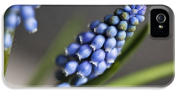 Grape Hyacinth IPhone 5 Case by Nailia Schwarz