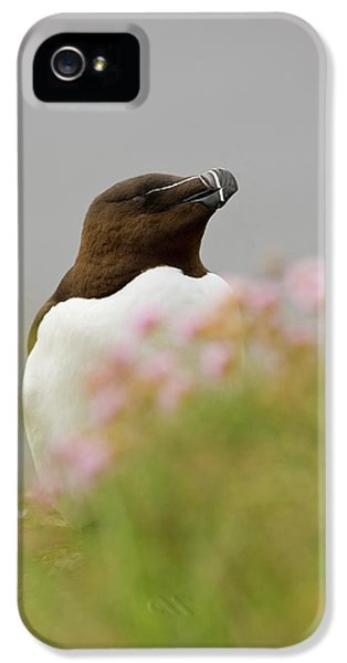 Iceland, Latrabjarg IPhone 5 Case