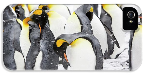 King Penguins On The Beach IPhone 5 Case