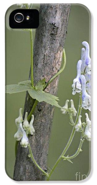 Monkshood Aconitum Albo-violaceum IPhone 5 Case
