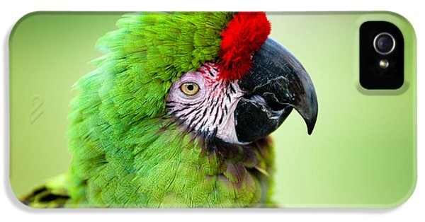 Parrot IPhone 5 Case by Sebastian Musial