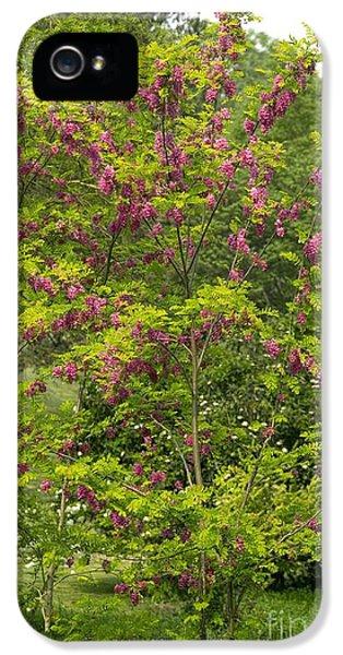 Rose Acacia Robinia Hispida IPhone 5 Case by Bob Gibbons