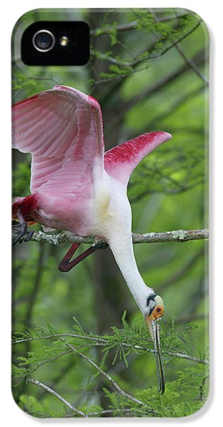 Usa, Louisiana, Lake Martin IPhone 5 Case by Jaynes Gallery