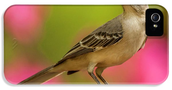 Mockingbird iPhone 5 Case - Usa, North Carolina, Guilford County by Jaynes Gallery