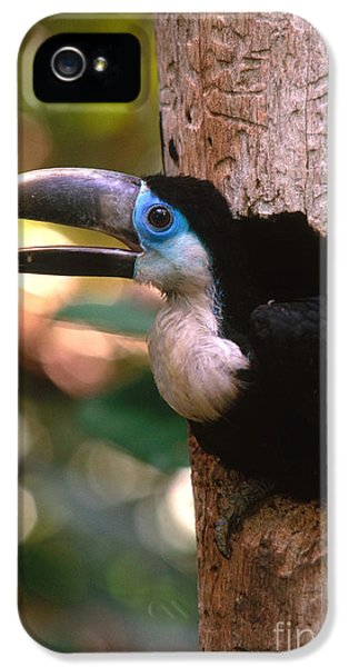 Yellow-ridged Toucan IPhone 5 Case by Art Wolfe