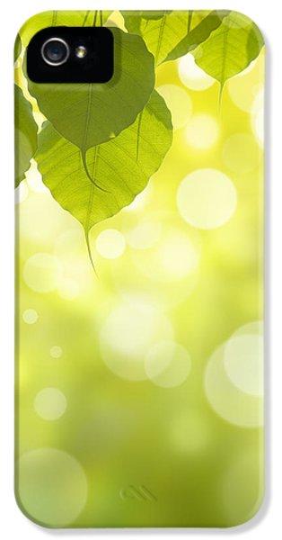 Pho Or Bodhi IPhone 5 Case by Atiketta Sangasaeng