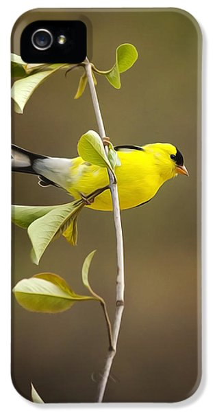 American Goldfinch IPhone 5 Case