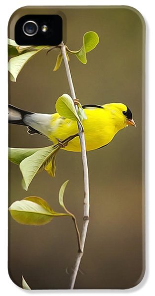 American Goldfinch IPhone 5 Case by Christina Rollo