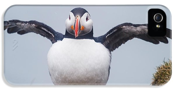 Atlantic Puffin Fratercula Arctica IPhone 5 Case by Panoramic Images
